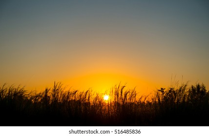 Sunrise dawn paddy fields.Fiery orange sunset sky. Beautiful sky.sunset in Thailand. Sunset on paddy fields.sunrise and sunray on paddy fields.