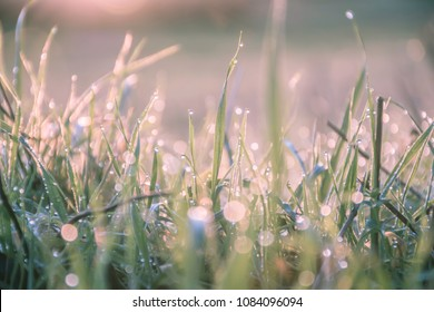 Sunrise and droplets of morning dew on grass leaves.Beautiful bokeh and  warm,golden tones.Ground level ,nature uk.Beauty of natural and magic world.