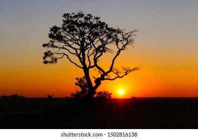 Sunrise in dry place in Brazil