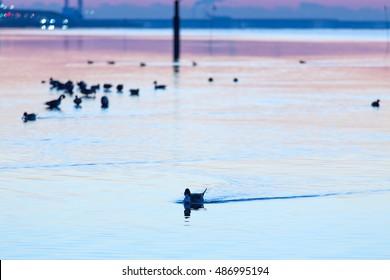 sunrise with ducks in ocean