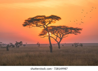 A sunrise in the early morning of game driving safari in the Serengeti national park, Tanzania.