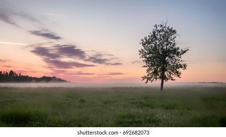 Sunrise in Elk Island Park in Alberta Canada with a  lone tree on Bison loop road.