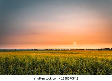Sunrise in a field in Amstelveen, The Netherlands