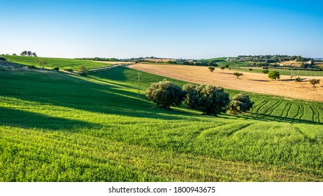 Sunrise in the fields of Marche from the village of Numana