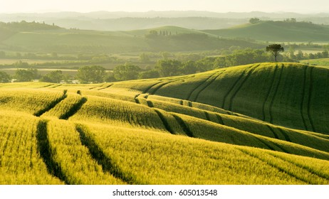 Sunrise in the fields of Tuscany, Italy