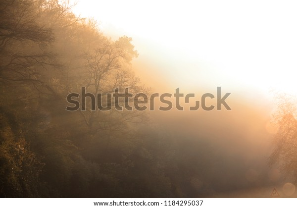 Sunrise fog going through trees in a magical forest.