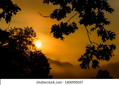 Sunrise and fog over the Allegheny Mountains of West Virginia, seen through the branches of a White Oak,  USA