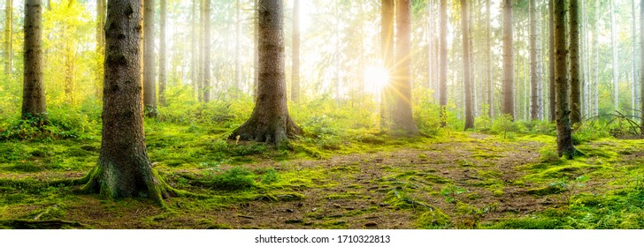 Sunrise in a foggy forest with bright sun shining through the trees