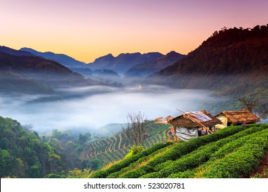 Sunrise and foggy mountain view of tea plantation at Doi Ang Khang, Chiang Mai, Thailand.