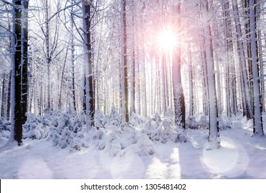 Sunrise in the forest between the trees trunks in winter. Snowy landscape in the wood.
