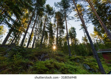 The Sunrise in the forest. Finland.