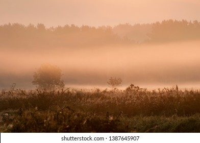 Sunrise in the forest with morning mist