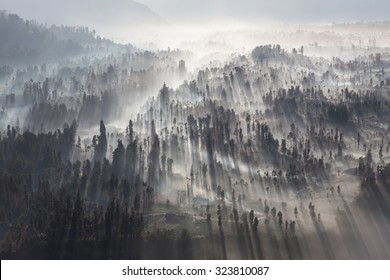 Sunrise in the forest near Bromo volcano, Java island, Indonesia