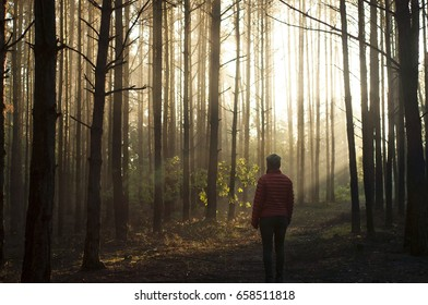 Sunrise in the forest. Perfect morning in the woods. Into the light concept. Life after life. Single woman in the woods going into the light from the darkness. Sun rays and fog.