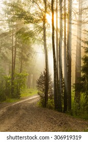 Sunrise in the forest with a road in August.