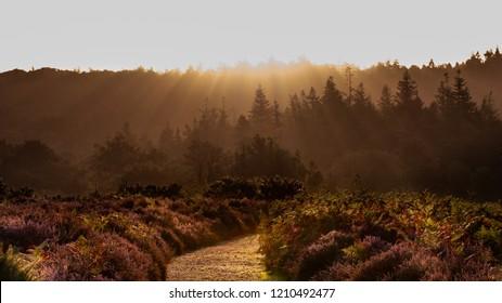 sunrise forest views