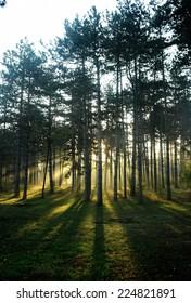 Sunrise in the forest/Sunrise in the forest