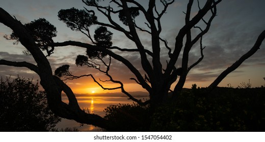 Sunrise framed by silhouetted tree branches at Tapeka point, Russell, Bay of Island