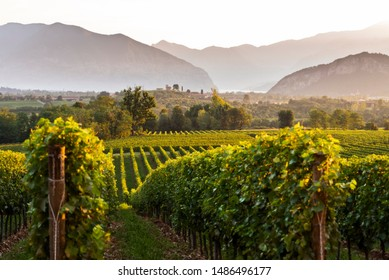 Sunrise in Franciacorta, Brescia province, Lombardy district, Italy, Europe
