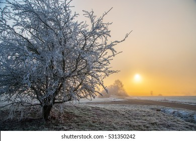 Sunrise / Frosty Morning