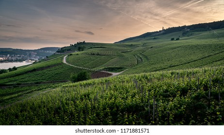 Sunrise in German vineyards at Rudesheim am Rhein