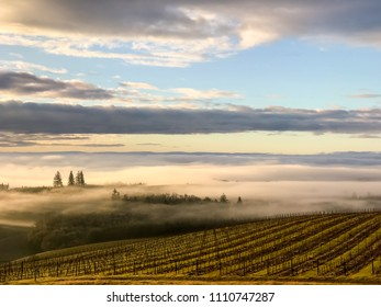 A sunrise glow warms the clouds and fog behind an Oregon vineyard with patches of blue sky.