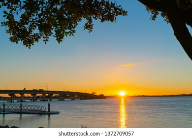 Sunrise  glows across Tauranga harbor with  curving lines of harbor bridge  and jetty framed by silhouette of puhutukawa trees.