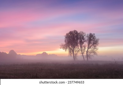Sunrise at the grassland