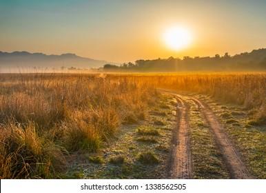 Sunrise at Grassland in jim Corbett National park, India