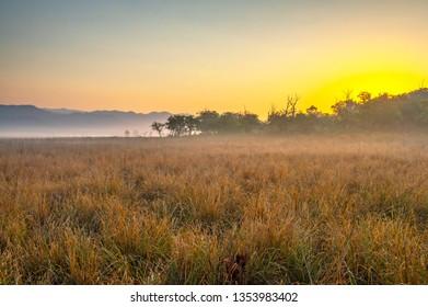 sunrise in grassland of Jim Corbett National Park, India