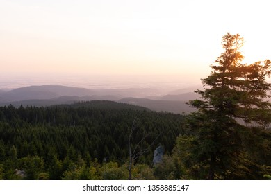 Sunrise in the Harz mountains - view over the forest
