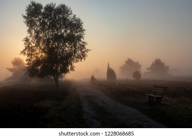 Sunrise at Heath Landscape in the Lueneburger Heide, Germany