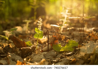 Sunrise and an image of the forest floor as the light peeks through the trees.