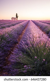 Sunrise into lavender fields.Valensole, Provence, France.