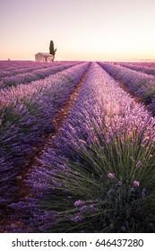 Sunrise into lavender fields.Valensole, Provence, France.