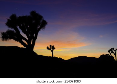 Sunrise in the Joshua tree National Forest with the moon still up