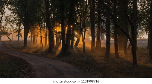 Sunrise in the Kanha Tiger Reserve, India