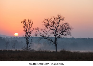 Sunrise at the Kanha Tiger Reserve in north central India.