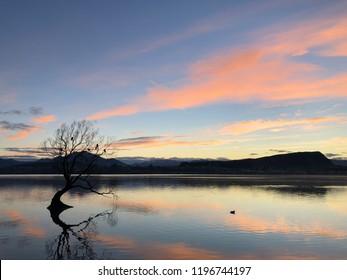 Sunrise at Lake Wanaka in New Zealand with that Wanaka tree in view