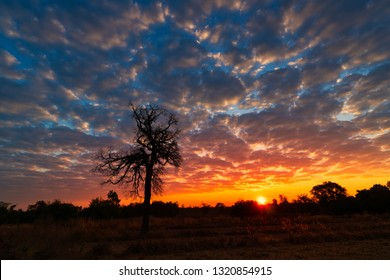 Sunrise Landscape, lonely tree with colorful sky in the morning