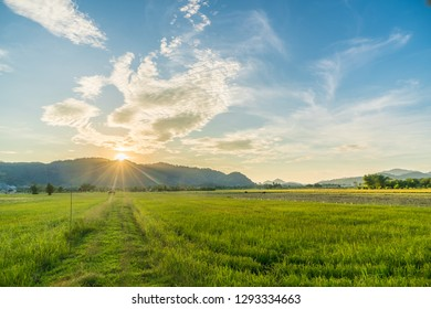 Sunrise Landscape of rice field with mountain background in Thai