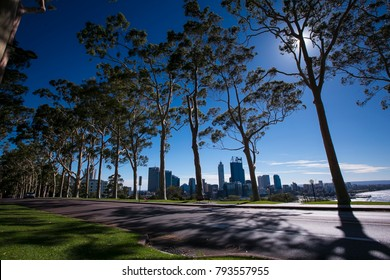 Sunrise landscape of river gum trees at King Park botanic gardens, looking toward Perth city CBD, Perth western of Australia