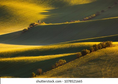 sunrise lines and waves with trees in the spring, South Moravia, Czech Republic