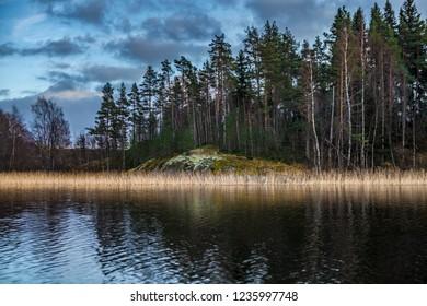 Sunrise. A lonely tree on the shore. Karelia. Russia. Ladoga lake. Morning in Karelia on the shore of the Ladoga lake. Northern nature.