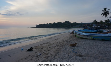 Sunrise at a lonley beach with dogs and fishing boats