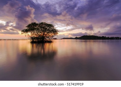 sunrise and mangroves in the middle of the sealocations teluk kiluan lampung indonesia
