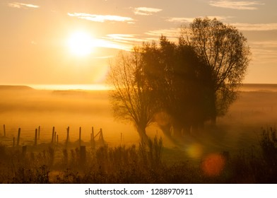 Sunrise in an mist covered landscape with trees in east Flanders. Late oktober.