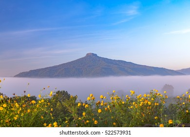 Sunrise and The Mist with Yellow Flowers Foreground in Winter ,This's Mountain looks like Mount Fuji in Japan., Landscape at Phu Hor ,  Loei Province,Thailand