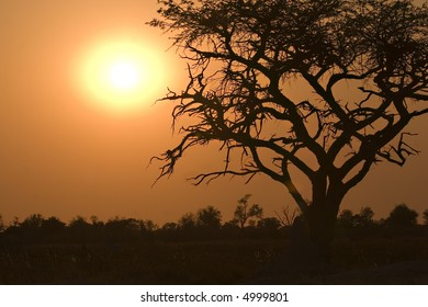 Sunrise in Moremi Game Reserve Botswana