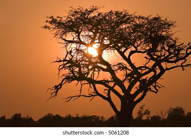 Sunrise in Moremi Game Reserve in Botswana